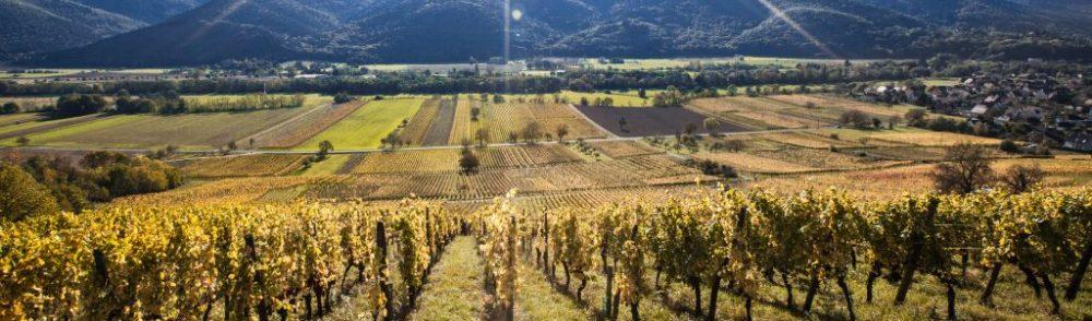 VINS D'ALSACE HEYBERGER – SALCH