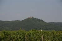 Vignoble 2-small.JPG