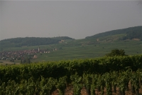 Vignoble 3-small.JPG